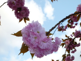 桜 040.jpg